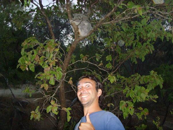 Sur cette photo est chaché un Koala !