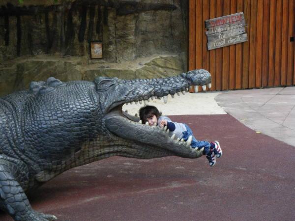 Un dernier spéctacle de nourissage de crocodile!!!!