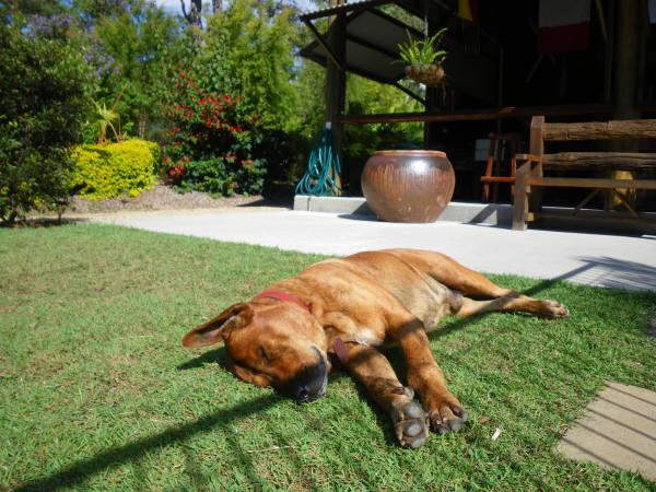 Bref une vrai vie de chien !!!!
